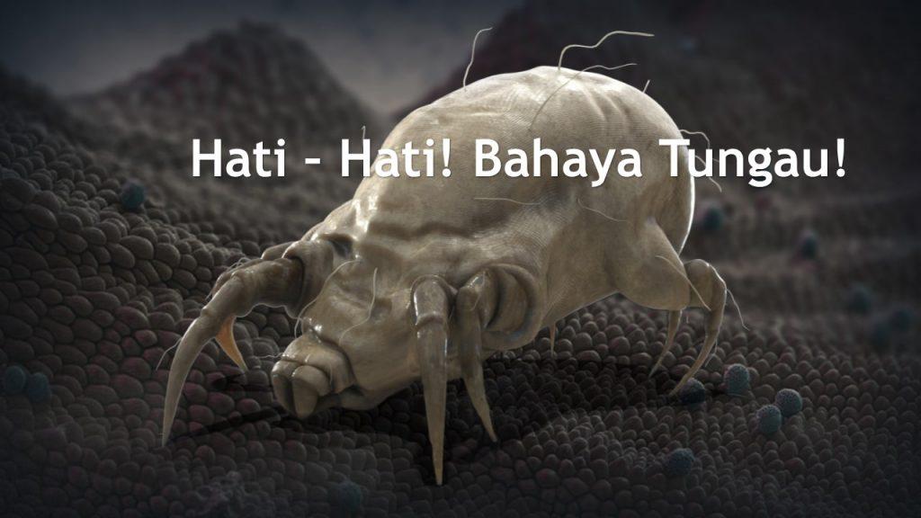 Hati hati bahaya Tungau